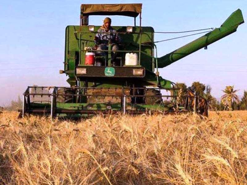 کار برداشت گندم در استان از دشتی آغاز شد