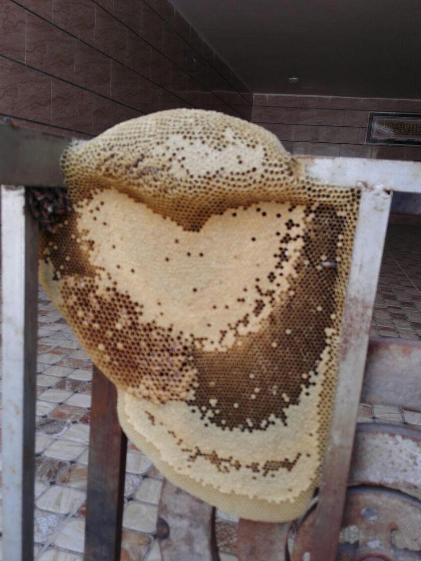 کلنی عسل طبیعی